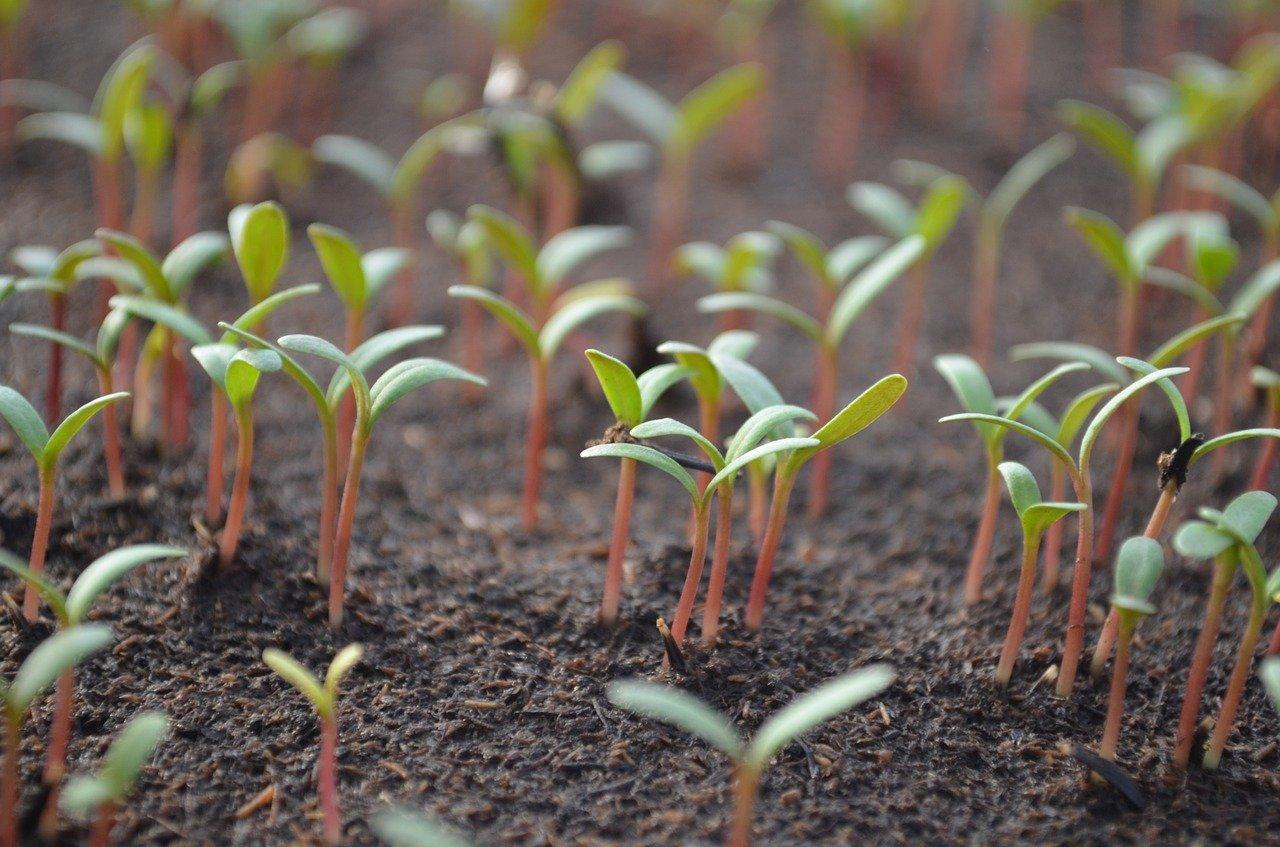 Zeleno-lijevi blok neće dopustiti uništavanje poljoprivrede temeljene na domaćem sjemenu